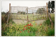 a gate in spring (Christos Theofilogiannakos) Tags: canonetql17giii canonet agfavistaplus400 rangefinder 35mm film