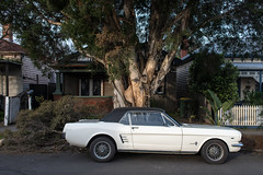 Seddon (Westographer) Tags: seddon melbourne australia westernsuburbs suburbia parked mustang paperbarktree house home winterlight