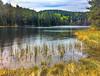 Forest Tranquility (bjorbrei) Tags: water shore lake pond tarn marsh forest trees hills tranquil tranquility calm spring setertjern solemskogen lillomarka marka oslo norway