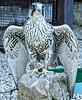 Volerie des Aigles de Kintzheim (PinkdreamPics74) Tags: volerie des aigles de kintzheim