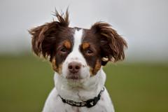 Tender (R.D. Gallardo) Tags: tender look tierna perro dog retrato portrait buru luna canon eos 6d tamron 70200 f28 raw