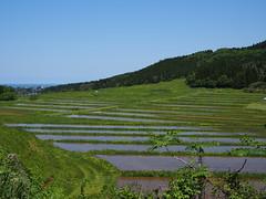 the rice-planting season (murozo) Tags: rice planting spring season green water sky nikaho akita japan 田植え 水田 田圃 春 緑 水 空 にかほ 秋田 日本