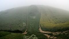 Misty Downland Walk (bimbler2009) Tags: fujifilms9900w fog mist landscape grass meadow fisheye
