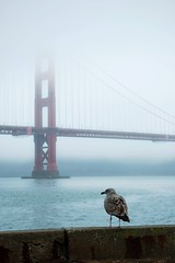 Golden Gate Bridge (georginaanastasiamay) Tags: mist foggy birds happy architecture world worldplaces landmarks california autumn miserable weather fog beautiful photography seagull goldengatebridge