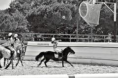 (C) Thomas Le Floc'H (thomaslefloch) Tags: centrevaldeloire championnatdefrance ffe fã©dã©rationfranã§aisedãquitation lamottebeuvron legrandtournoi parcãquestrefã©dã©ral but championnat cheval compã©tition concours poney