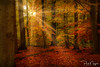 Dreaming Forest (Paul Nagels) Tags: forest tree trees light sun sunbeam