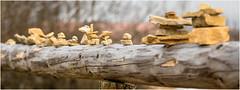 Stones . (:: Blende 22 ::) Tags: stones fence urbenschanze portaeichsfeldica ohmgebirge holungen muschelkalk mittelalterlichebefestigungsanlage skywalk glasboden klippe braunerbühl sage gläserneaussichtsplattform germany german deutschland deutsch thuringia thüringen eichsfeld eic landkreiseichsfeld sonnenstein skulptur canoneos5dmarkiv ef70200mmf4lisusm