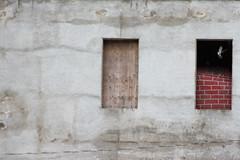 pigeons (Tracy Isaacs) Tags: windows urban minimalism wall londonontario