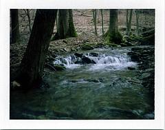 (babireley) Tags: roidweekspring2018 roidweek2018 polaroid250 fujifilmfp100c pawilds pottercounty pa pottercountypa