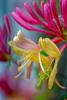 Diane's Flower Garden (jkowalski2) Tags: artistic closeup day fineart flowers imagetype macro nature outdoor photospecs seasons stockcategories summer time vegetation gardenplants plants gatineau qc canada ca
