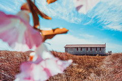 Island Flower House thing (ashercurri) Tags: island house nc north carolina flower