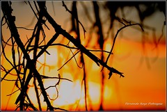 Atardecer (gjedbz) Tags: sol ocaso atardecer oro canal imperial aragón paisaje luz zaragoza