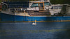 Swan (moritzsee) Tags: swan schwan wasse main river fluss würzburg heidingsfeld wasser water wildlife animal white boat schiff boot nature