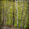 Boschi in val Sangone (Paolo-Do) Tags: verde giaveno val sangone boschi albero alberi