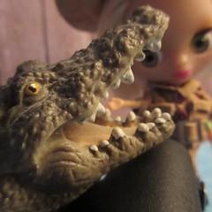 Solki Blythe, Crocodile Dentist (jefalump) Tags: lpspetiteblythe bucklesandbows savetheanimals incrediblecreatures shleich safariltd crocodile portrait jagged macromondays atsh