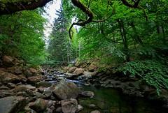 Frühling in der Buchberger Leite (fuchs_ernst) Tags: nikon weitwinkel bayern brücke wald niederbayern bayerischerwald wasser steine frühling felsen