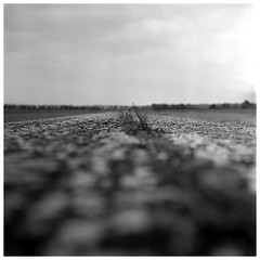 When nature takes the airfield back (irgendwiejuna) Tags: gras airfield berlin gatow delta100 ilford caffenol caffenolcl 120 6x6 blackandwhite selfdeveloped rolleiflex