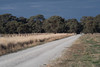 Road to the river (OzzRod (on the road again)) Tags: pentax k1 smcpentaxk200mmf4 bush road trees roadsise clouds afternoonlight converginglines echuca