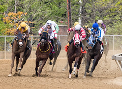 2018 Pimlico Race track (57) (maskirovka77) Tags: pimlico dirt mare race racehorse threeyearold turf yearling