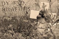 British military cemetary (hutsepot) Tags: papaver poppy mohnbluhme coquelicot british english brits anglais britanique military militair militar militär militaire kerkhof friedhof cemetary cimetiere cimetière soldatenkerkhof coxyde koksijde commonwealthwargravescommission worldwar wereldoorlog weltkrieg guerremondiale eerste erste first premiere première woi wwi greatwar grooteoorlog groteoorlog monochroom monochrome zwartwit blancnoir schwarzweiss blackandwhite sepia
