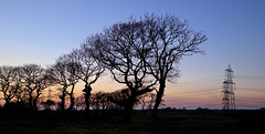 random vs planned (againandagain251) Tags: tree treebranches sunset emptyfield silhouette overlandpowercables electric winterlandscape pembrokeshire westwales kilgetty randomshapes