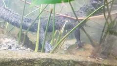 20180523_110415 (TheSlayerNL) Tags: wildlands emmen zoo dieren animals adventure wildlandsadventurezoo