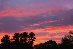 Sunset tonight <3 (lilredlizzie) Tags: sunset sky colors clouds silhouette tree trees massachusetts newengland outdoors outside nature naturelovers artgrowninnature spring colorful beautiful beauty pretty canon canon6d canon2470l landscape