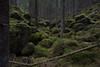 Enchanted forest (Kettle) (talaakso) Tags: dödisgrop enchancedforest enhanced finnishlandscape forest nikkor20mm nikond610 finnishforest finnishnature greenmoss kettle kettlehole landscape moss mossy mossyforest pothole sammalikko sammalpeite stony suppa hausjärvi tavastiaproper finland fi enchantedforest bewitched charmed lumottu lumottumetsä kivikko green vihreä hikiä kantahäme