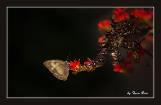 SHF_6734_Butterfly