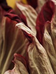 P4240508 (ejewett87) Tags: macro corpse plant