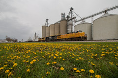 Yellowness (Jake Branson) Tags: train railroad locomotive up union pacific c449w dash 9 sd60i ns yellow flower grain elevator spring il illinois farina