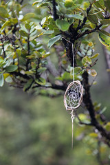 Catching dreams (mfeingol) Tags: kilaueaiki dreamcatcher ohialehua hawaiivolcanoesnationalpark hawaii bigisland volcano pāhoa unitedstates us