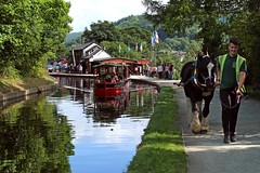 Llangollen Canal in Wales (JauntyJane) Tags: towpath horsedrawnboat llangollencanal canal horse barge boat llangollen wales