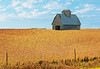 Iowa Gold Mine (garywitte845) Tags: iowa beans shed fence golden farm field sky textured clouds