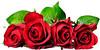 flower (vidoclub.com) Tags: flower service video videos social nerwork site share sharing سایت سرویس اشتراک ویدیو آپلود دانلود