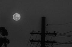 One Evening (Mr Clicker / Davin) Tags: mr clicker moon luna black white filter edit