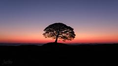 Twilight - Grindon Moor (JamesPicture) Tags: dawn grindon lonetree moor peakdistrict silhouette staffordshire sunrise