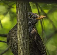 7J9A3946 (Mal.Durbin Photography) Tags: forestfarm maldurbin wildlifephotography wildlife birds
