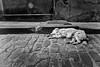 (jsrice00) Tags: leicamtyp240 28mmf2summicronasph streetphotography perro dog havana cuba