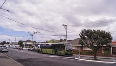 (andrewsurgenor) Tags: transit transport publictransport nzbus gowellington electric trackless trolleybus trolleybuses wellington nz streetscenes bus buses omnibus yellow obus busse citytransport city urban newzealand
