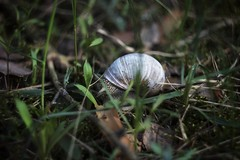Day 97 (a_salnikova) Tags: 365project 365 canon550 helios44m manualfocus oldlens snail forest blur bokeh spring may
