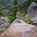 Écureuil au Mont Edith Cavell