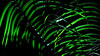 doin' the jungle jive (milomingo) Tags: nature plant green black lines abstract linear onblack geometry blade horticulture botanical organic light dark contrast grass highlight shadow bright bold vivid palm frond symmetry cmwd cmwdgreen vibrant foliage leaf outdoor
