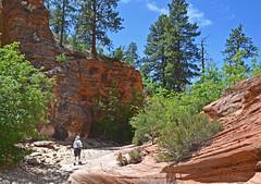 Wilderness Hiker (Runemaker) Tags: dl runemaker hiking hiker wilderness wash trail zion nationalpark utah landscape nature