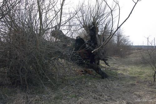 Волинське Полісся Стара верба InterNetri Ukraine 2018 35