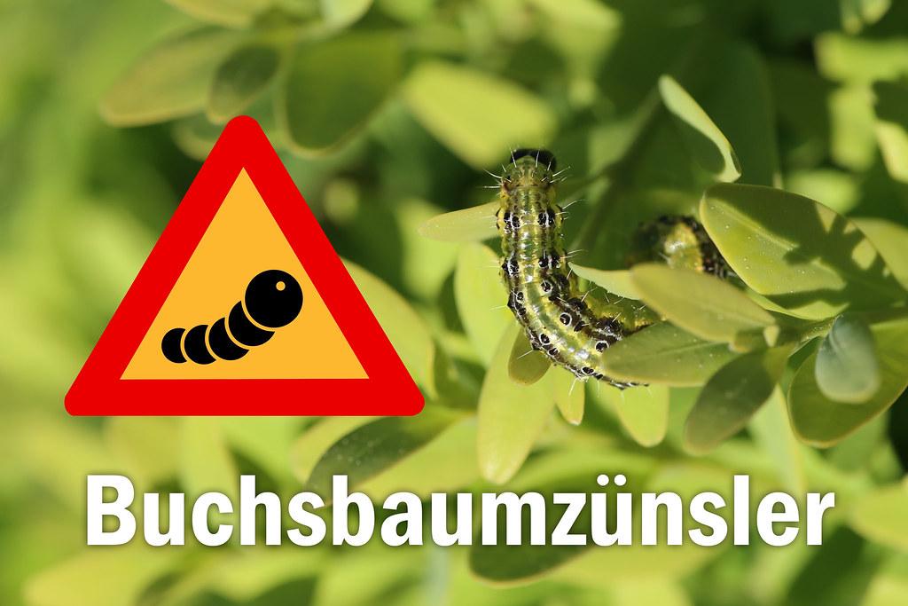 The World S Best Photos Of Buchsbaum And Schadling Flickr Hive Mind