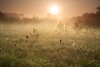 Teasle Dawn (Julian Barker) Tags: hemington sawley leicestershire east midlands england uk derby nottingham teasle dawn field early morning mist atmosphere landscape julian barker canon dslr 5d mkii