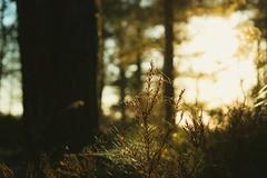 creative Tao (Diana Knjazeva) Tags: nikon d3300 55 mm eesti vääna jõesuu forest nature plant web bokeh estonia manual focus