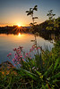 Happy Birthday Norway! (17. May) (Vest der ute) Tags: norway rogaland haugesund xt2 water waterscape landscape lake flowers grass sunset sky reflections fav25 fav200