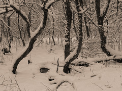 Vercors, 2018 (Olivier BERTRAND) Tags: vercors blackandwhite blackandwhitephotography digitalphotography neige forêt forest hiver isère landscape lumix25mm lumix landscapephotography monochrome micro43 noiretblanc nature naturallight olivierbertrand olympusem5markii olympus panasoniclumix25mm snow winter woods 25mm mo
